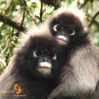 spectacled monkeys in love