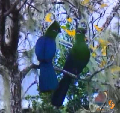 46. garden route birds