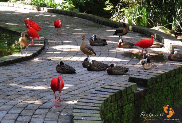 birds – garden route – IMG_7604