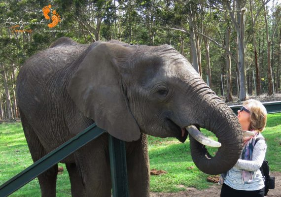 elephant feeding – garden route – IMG_6027