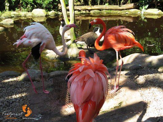 flamingos – garden route – IMG_7665