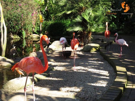 flamingos – garden route – IMG_7678