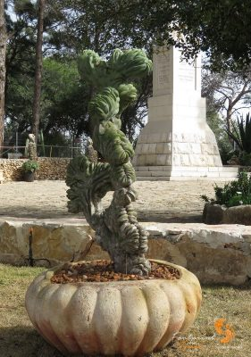 interesting succulent – Mount Carmel – IMG_6122