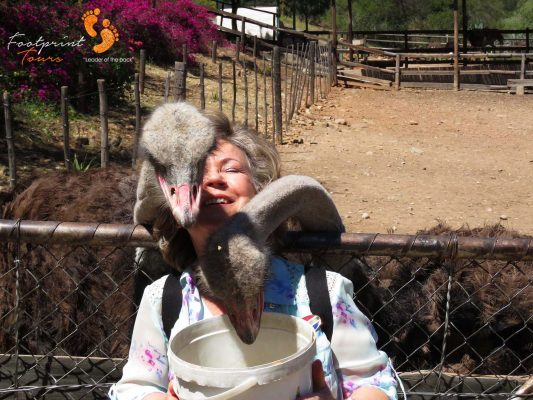 loving ostriches – garden route – IMG_5897