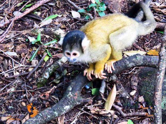 monkey – garden route – IMG_2838