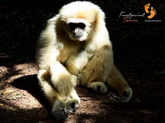 monkeys – garden route – IMG_2921