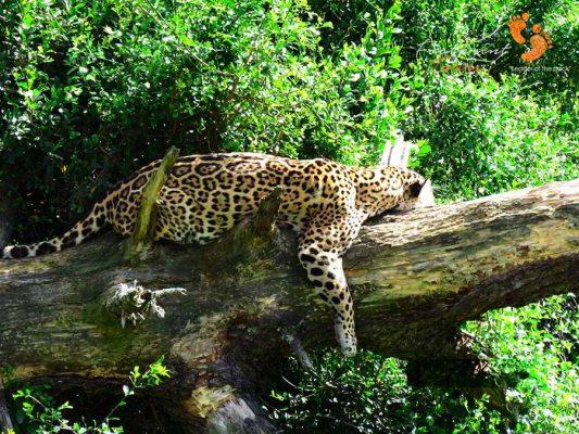 safari – IMG_3004