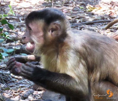 small monkey – big teeth – IMG_7390