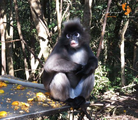 spectacled monkey – IMG_7463
