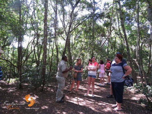 tourists walk with monkeys – IMG_7392