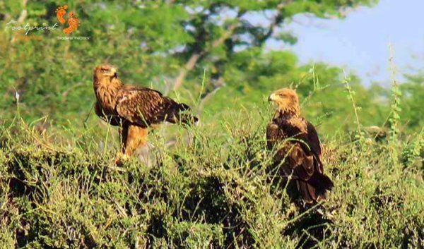 etosha safari – namibia – IMG_1447