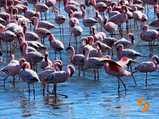 flamingos – walvis bay – namibia – IMG_1080