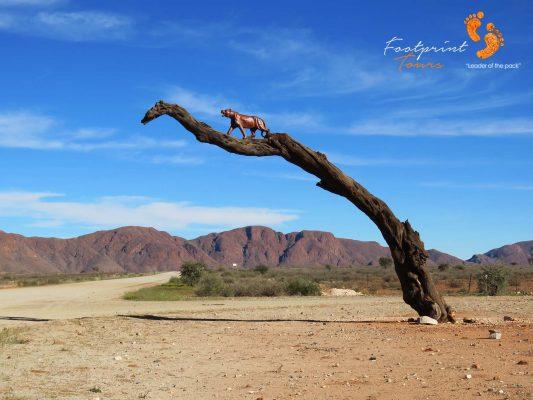 namibia – IMG_0677