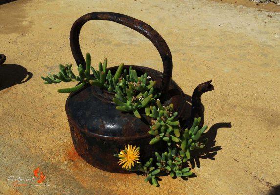 namibian kettle – IMG_0548
