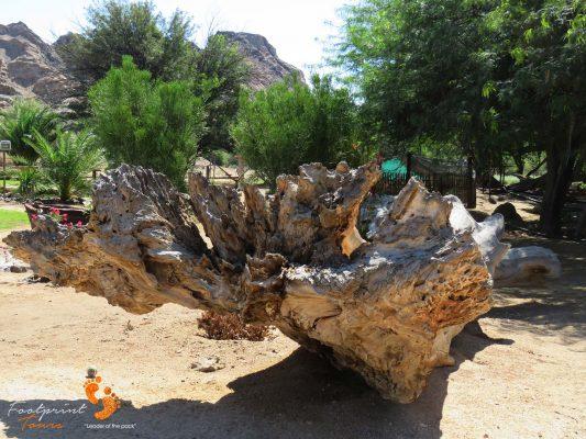 oasis in desert – namibia – IMG_1185