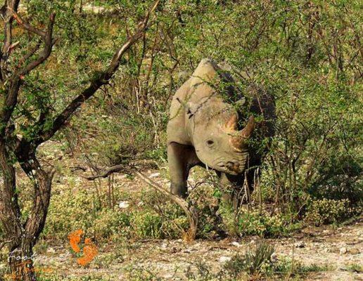 rhino – safari – IMG_1709