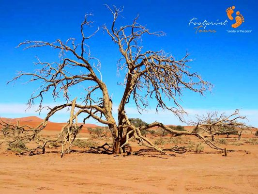 sossusvlei – namibia – IMG_0760