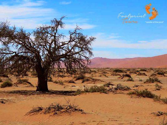sossusvlei – namibia – IMG_0780