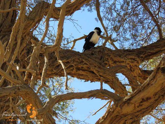 sossusvlei – namibia – IMG_0794