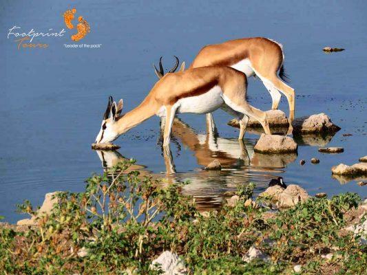 springbok – safari – IMG_1491