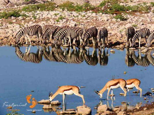 waterhole etosha – namibia – IMG_1485