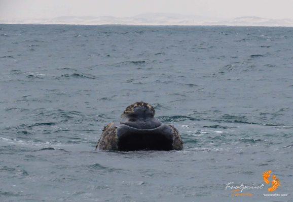 whale – IMG_2750