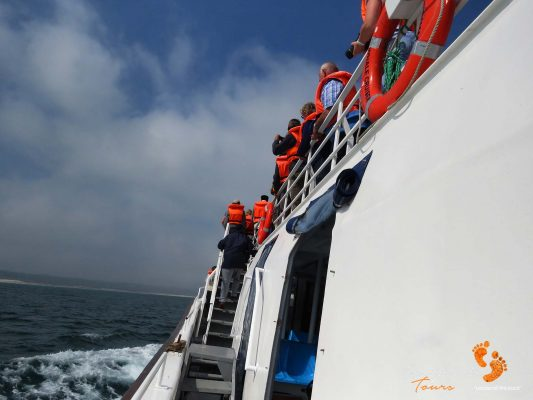 whale watching – IMG_2609