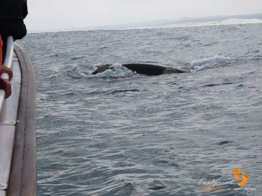 whale watching – IMG_2676