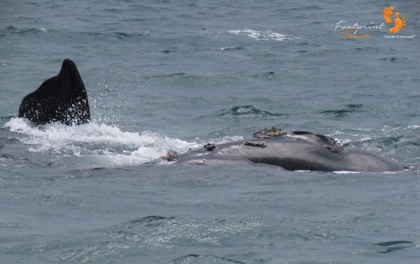 whales – IMG_2740