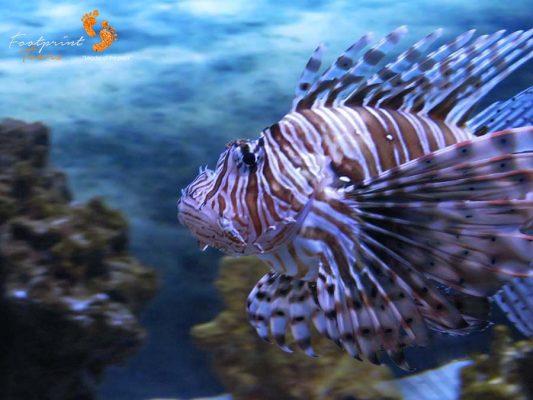 V&A waterfront aquarium Cape Town – IMG_3706