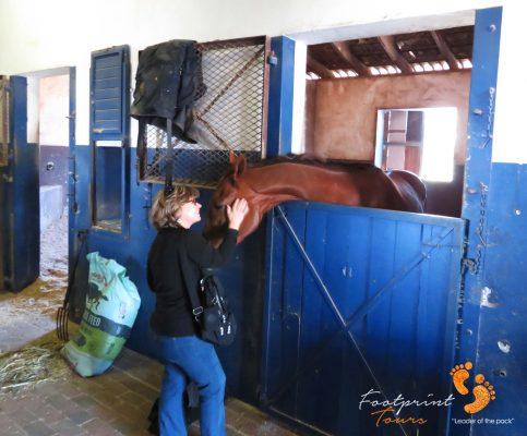 horse riding – peninsula – IMG_5729