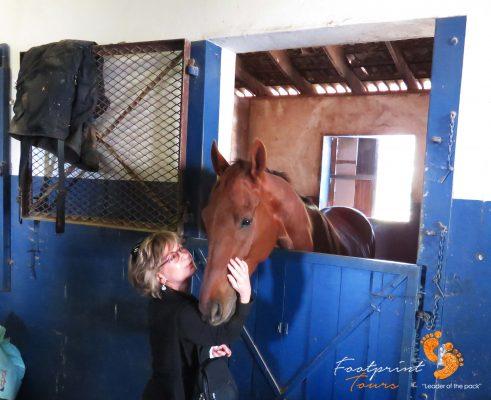horse riding – peninsula – IMG_5734