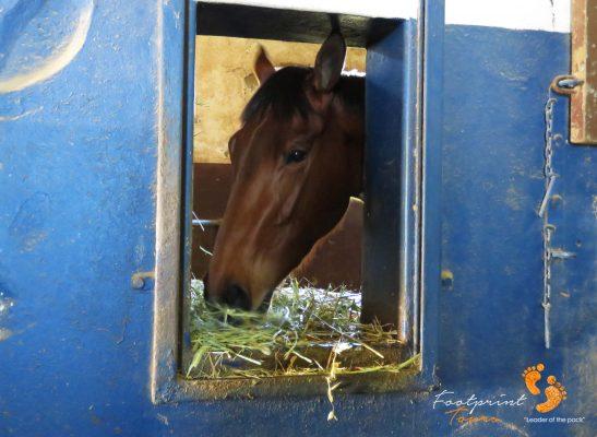 horse – stable – peninsula – IMG_5779