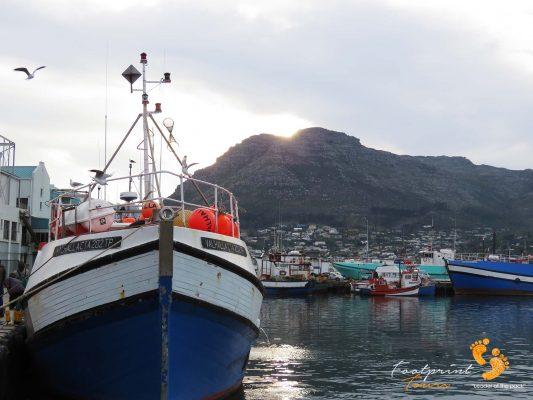 houtbay harbour – peninsula – IMG_2094