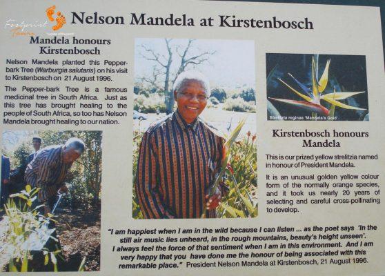 mandela at kirstenbosch – cape town – DSC03325