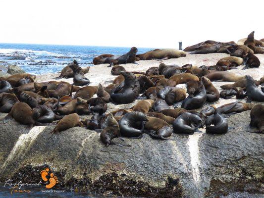 seal colony – peninsua – IMG_5245