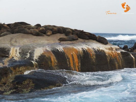 seals – houtbay – IMG_2111