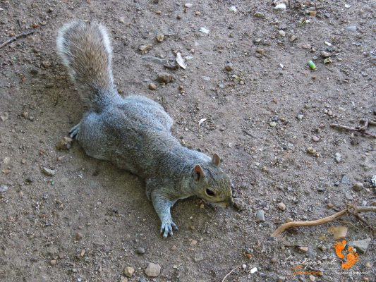 squirrel – company gardens – cape town – IMG_4954