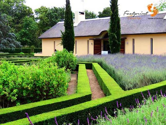 wine estate with lavender – IMG_4573