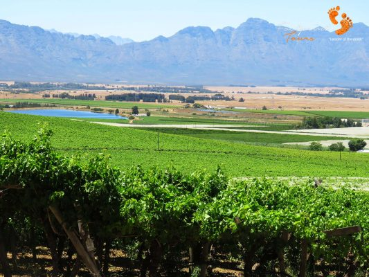 winelands – IMG_4476