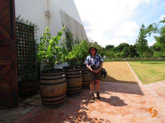 winelands tourist – IMG_4535