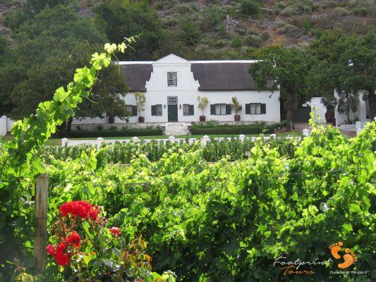 winelands vineyards – IMG_4819