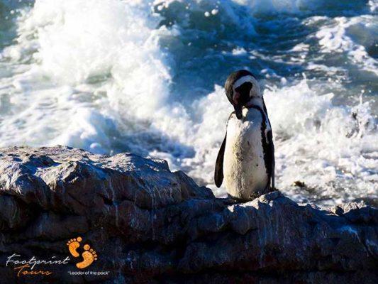 penguin – IMG_2050