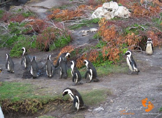 penguin colony – IMG_7980