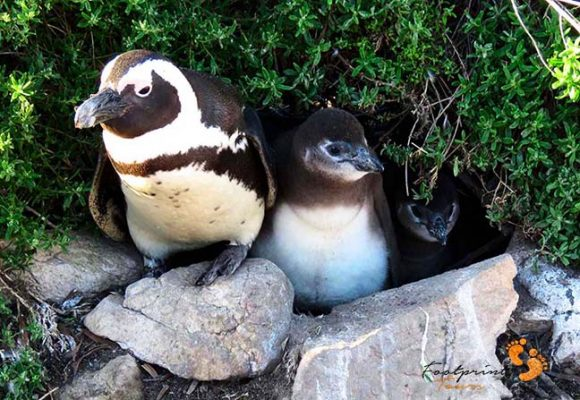 penguin family – IMG_2073