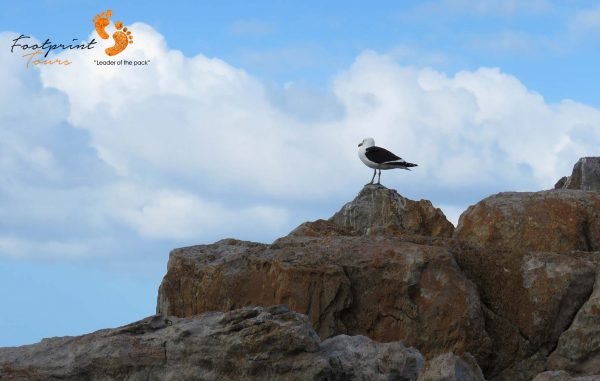 seagull on lookout – IMG_7977
