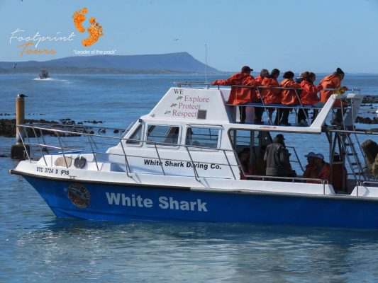 shark cage divers – IMG_8053
