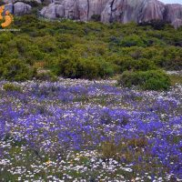 namaqua at its best