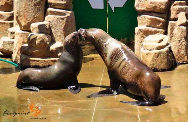 seals – ushaka marine world – IMG_3965