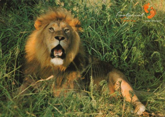 king of the jungle – IMG_006